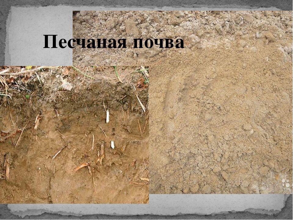 Песчаная порода грунта
